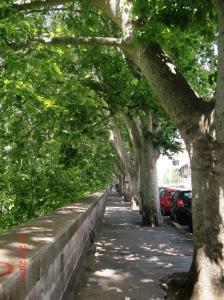 Tiber Walk