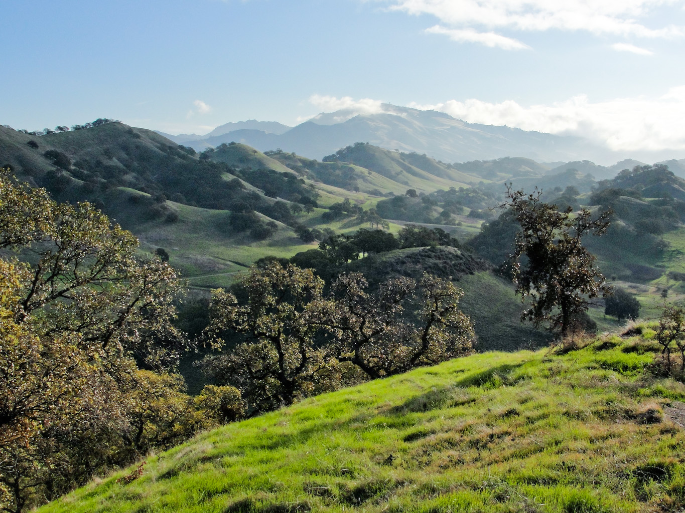 Mount_Diablo_from_Quarry_Hill_in_Shell_Ridge_Open_Space
